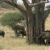 Tarangire Africa-elephants